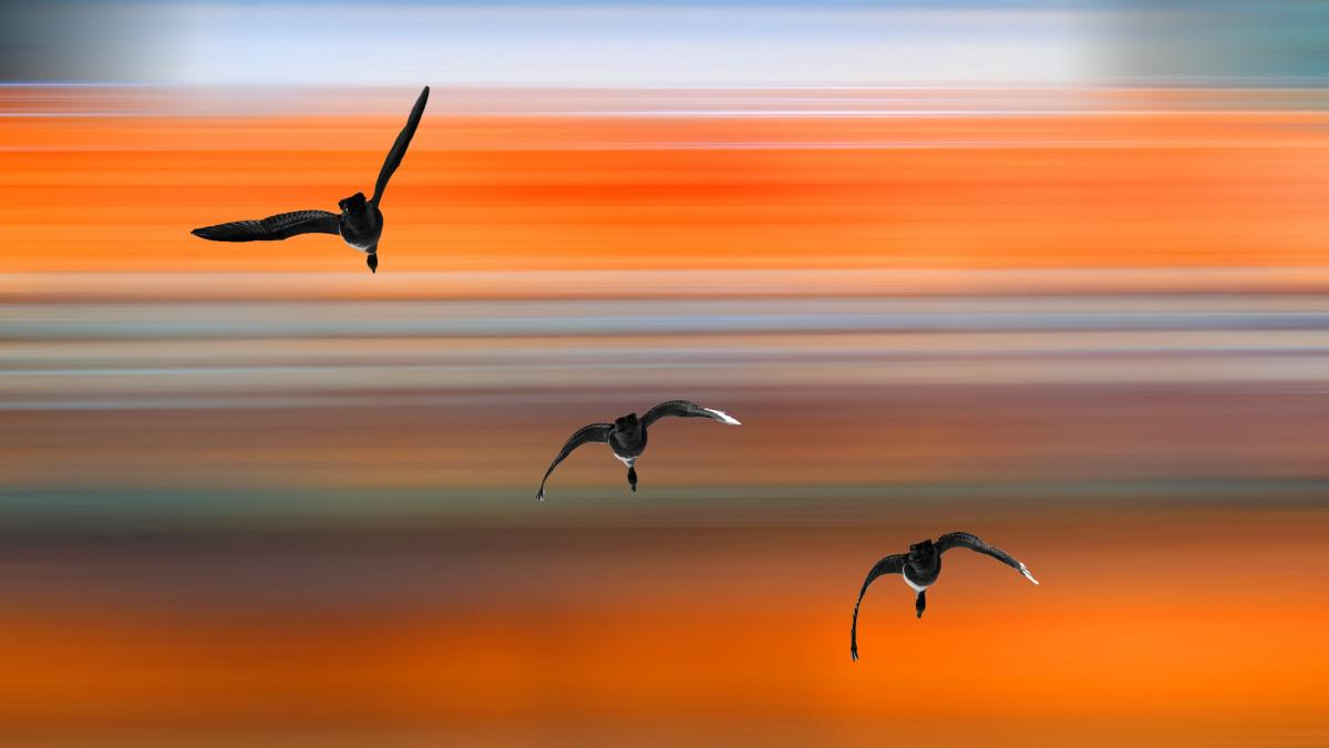 Migrating birds against a striped background